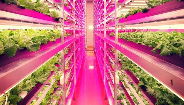LED-grow-lights-improve-agricultural-output
