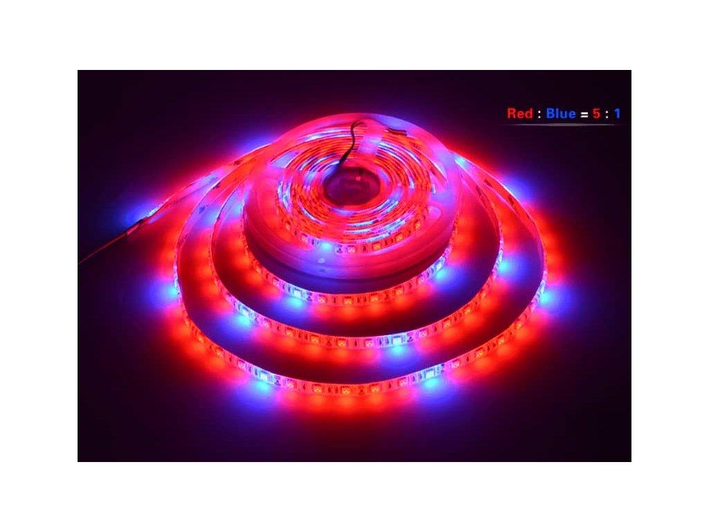 LED grow apsek r5b1