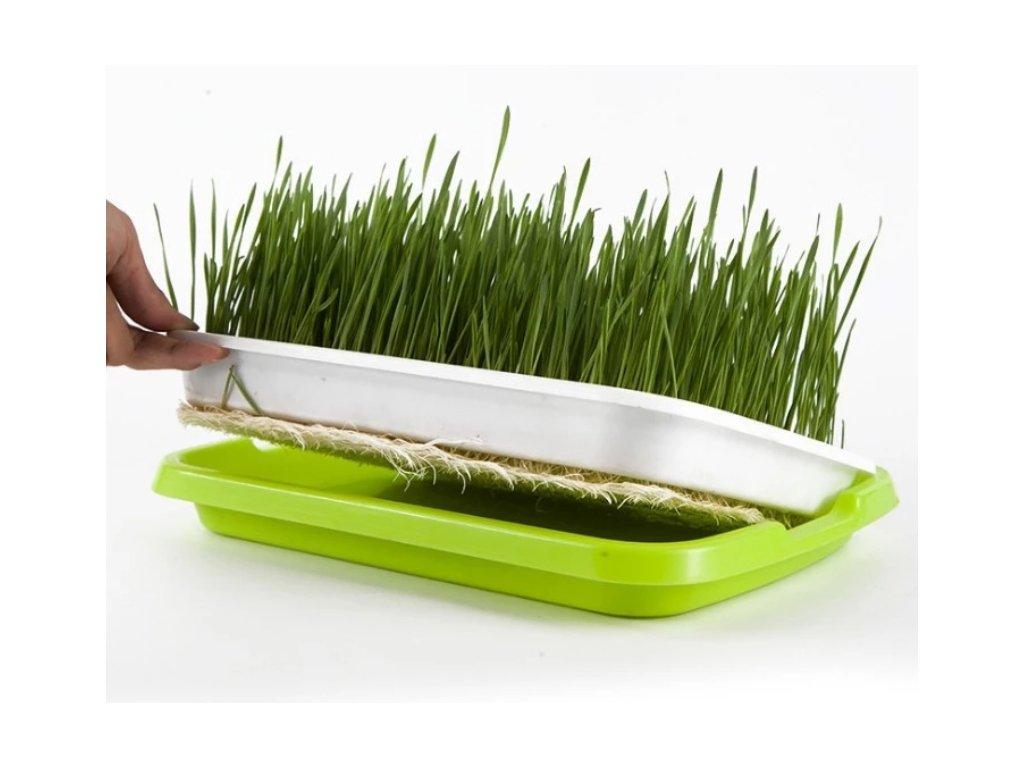 tác podmiska pro pěstování microgreens