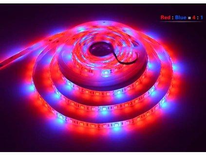 LED grow pasek r4b1