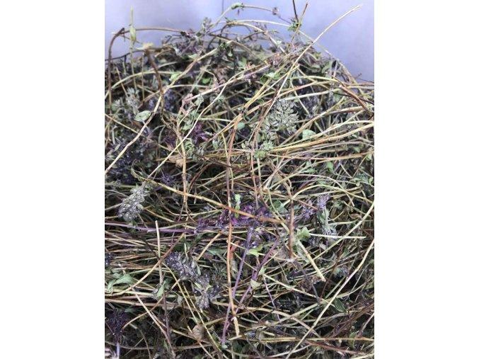mateřídouška v žoku lekarnaproradost lecivka bylinka