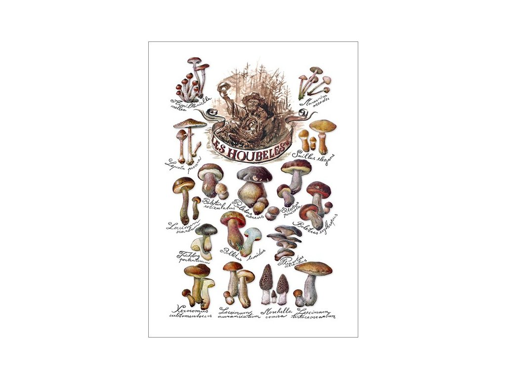 Originální plakát Les Houbeles - Naše jedlé houby
