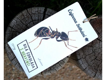Bílá čokoláda s mravenci