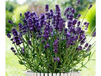 valence dark violet3