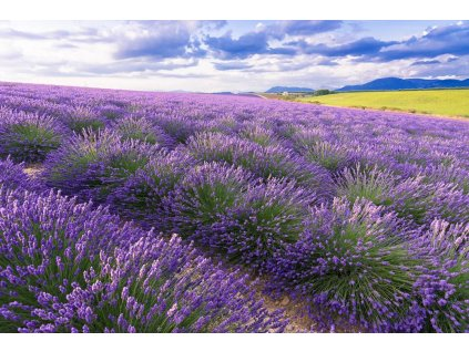 intermedia Provence 4