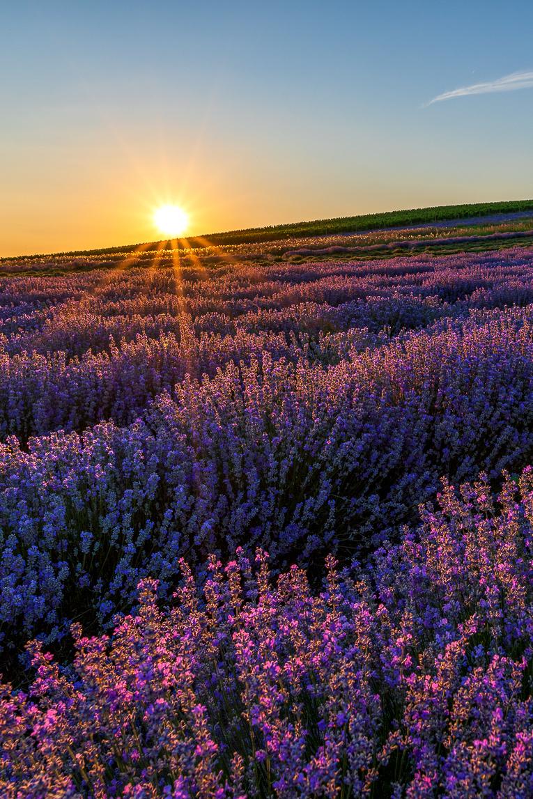 Fialový sen - fotky při západu slunce od Petra Fojtíka
