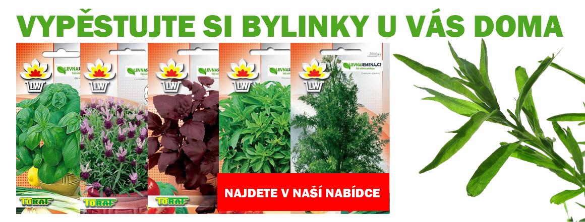 Semena bylinky a léčivky