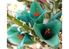 Semena okrasných květin