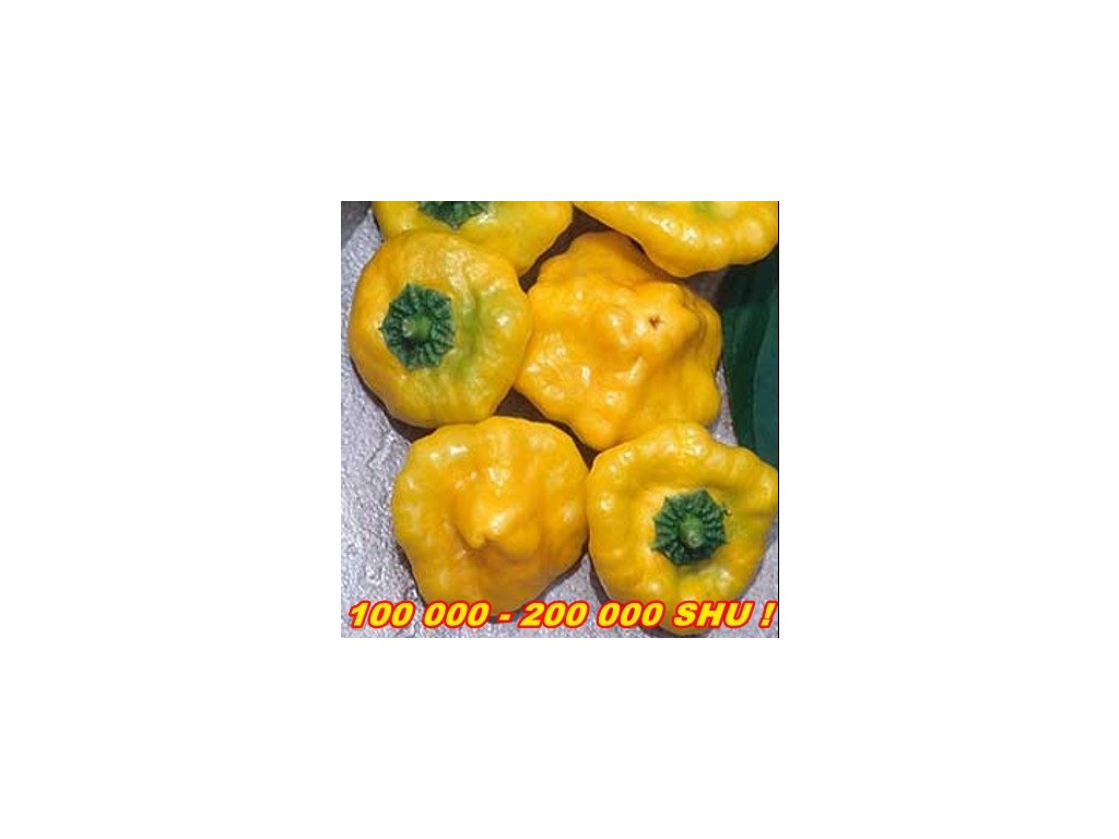 CHILLI PAPRIČKY JAMAICAN HOT YELLOW/10SEMEN/