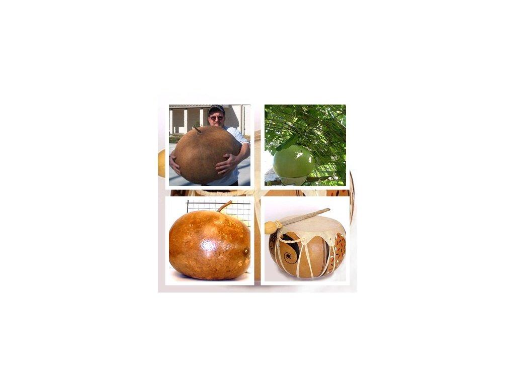 Gigantická bušlová tykev top rarita dýně /5 semen/
