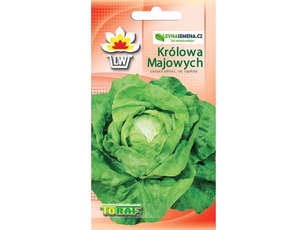 SALÁT HLAVKOVÝ MÁSLOVÝ MÁJOVÁ KRÁLOVNA/1100 semen/
