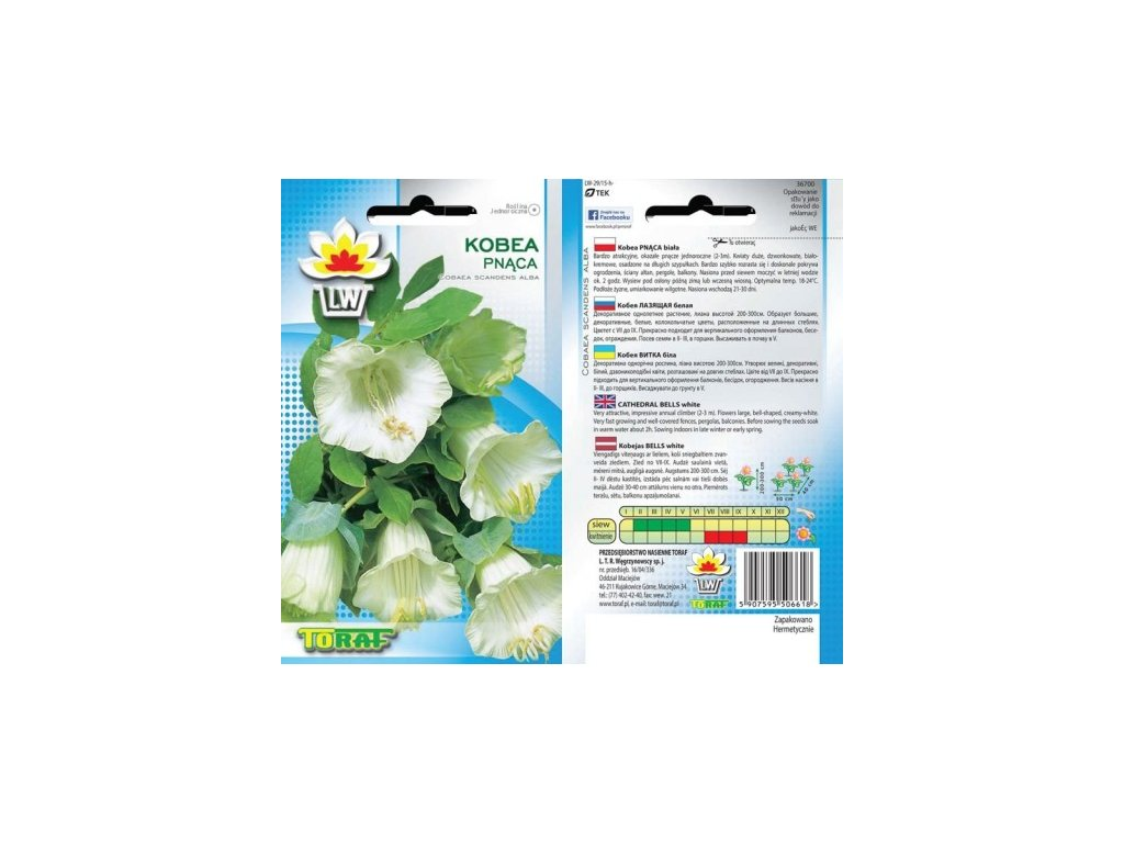 VILEC ŠPLHAVÝ- Cobea scandens /10 semen/ Bílý