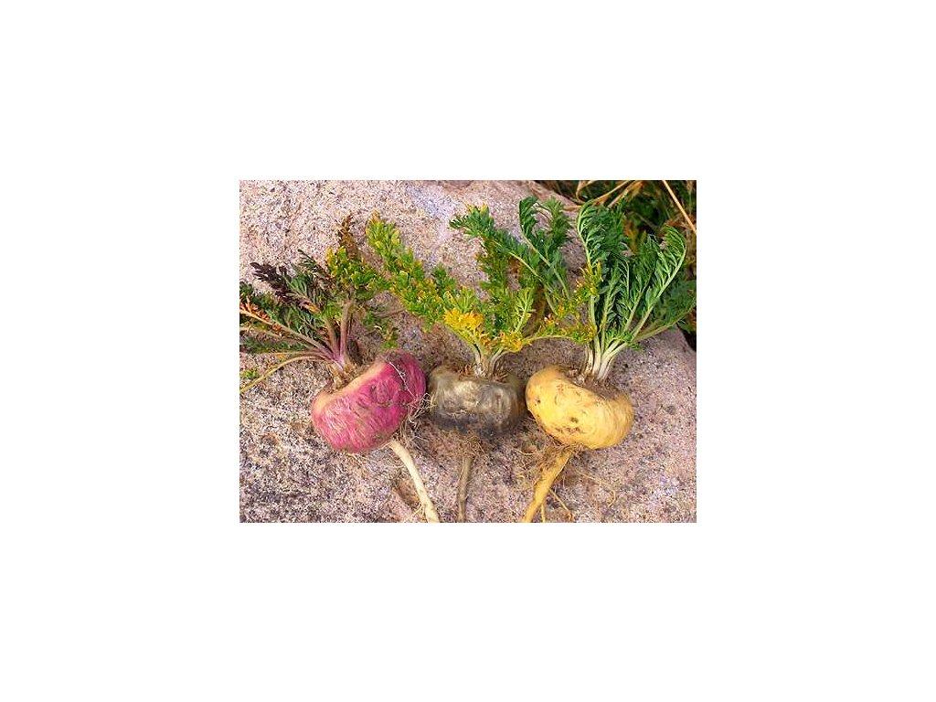 Maca žlutá –Lepidium meyenii 50 semen