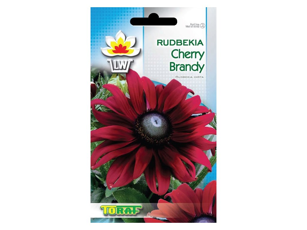rudbekiaCherryBrandy1