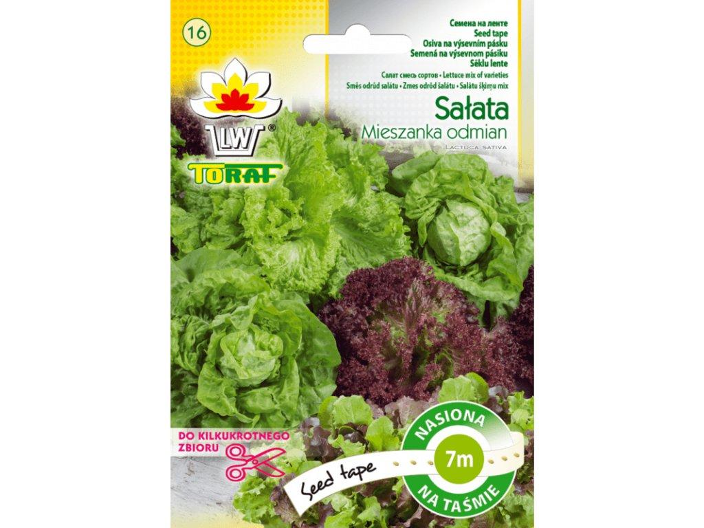 salata mieszanka odmian tasma f