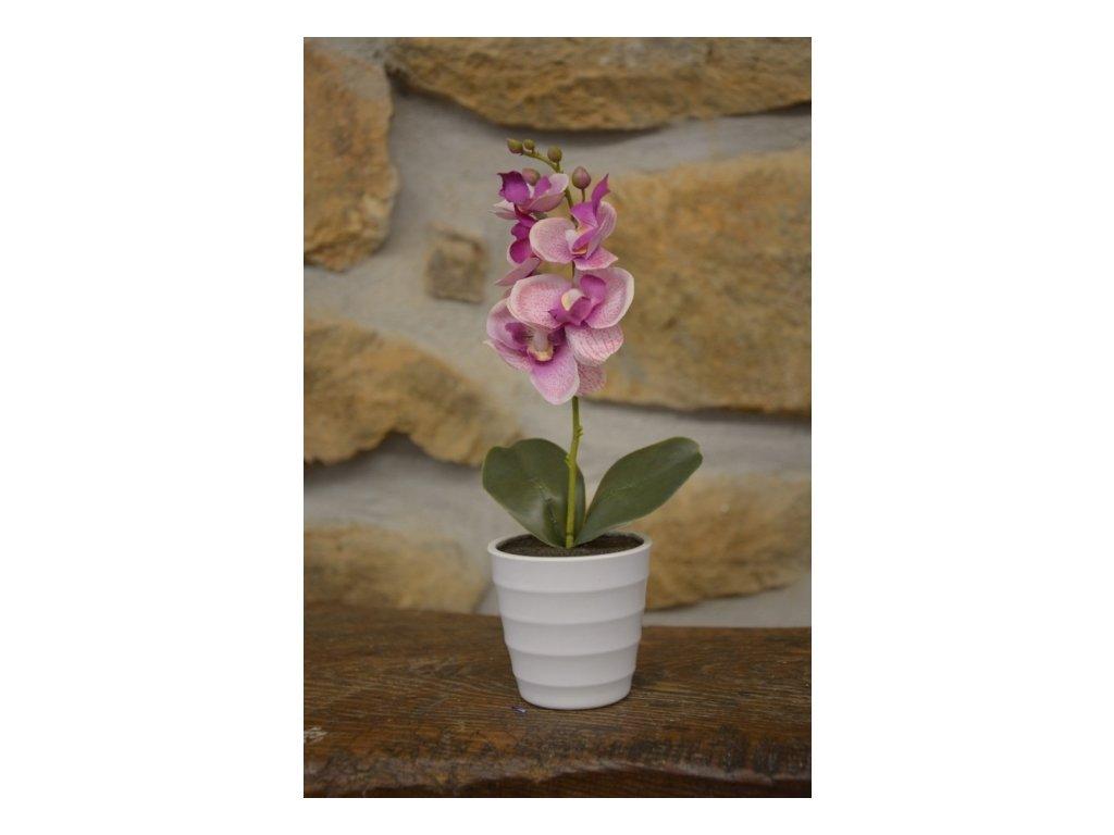 SEMPRO Orchidea mini v květináči 23cm růžovobílá