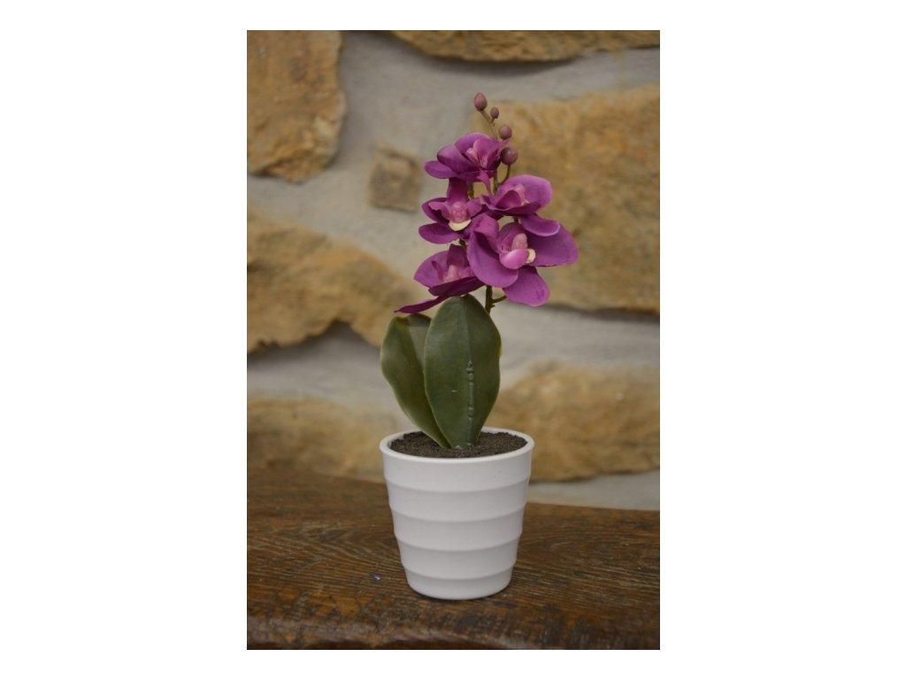 SEMPRO Orchidea mini v květináči 23cm fialová