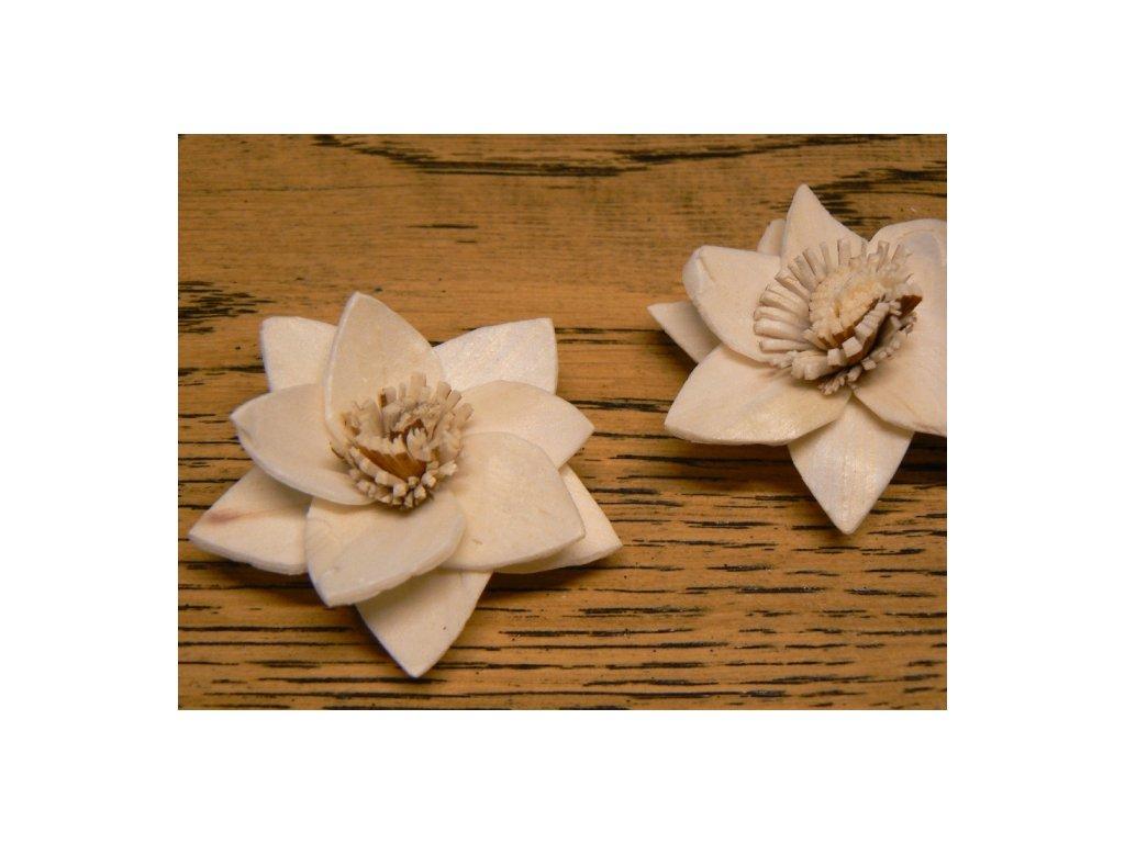 CERINO Sušená přízdoba květ RUKMANI 4cm
