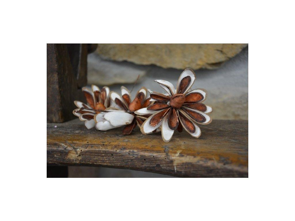 CERINO Sušená přízdoba květ KIMI 6cm