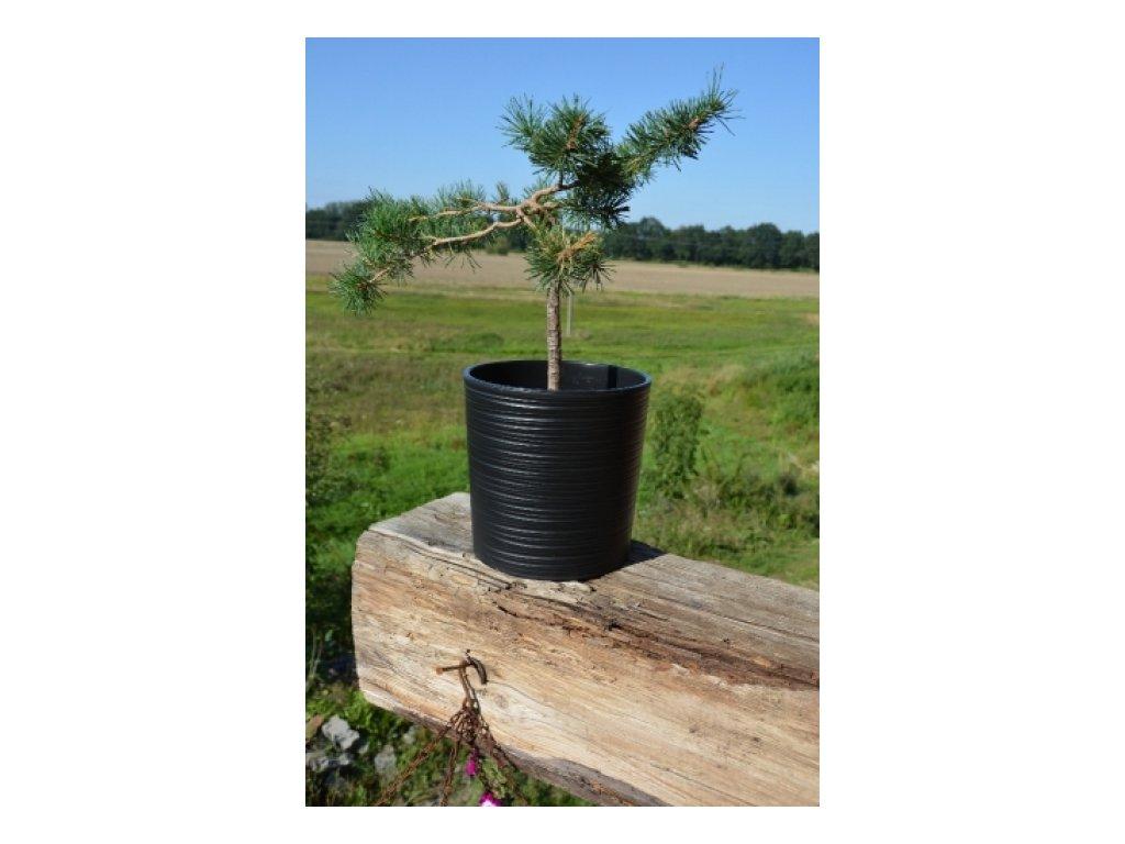 Lamela Květináč plastový Malwa dluto 250, výška 25cm černý