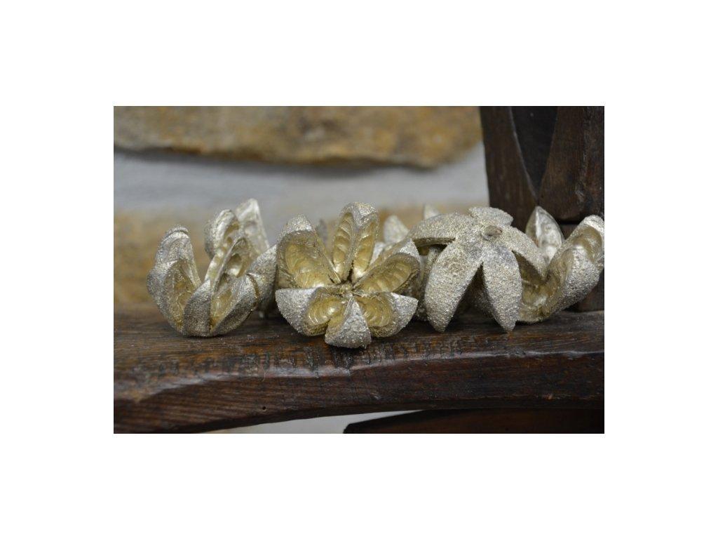 Cerino slupka z ořechu barvená 6-9cm zlatá