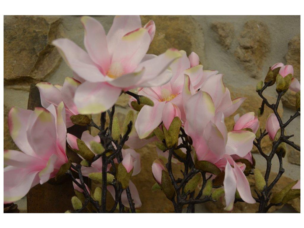 magnolie 1235