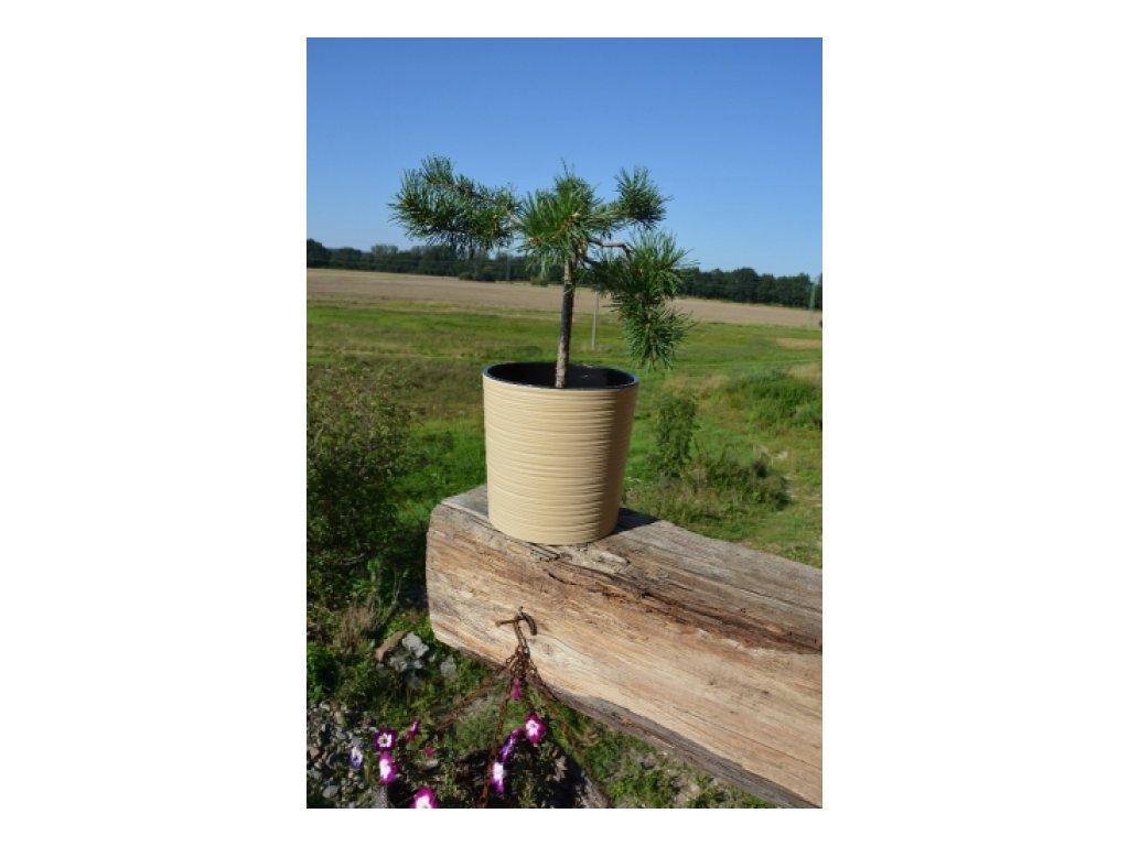 Lamela Květináč plastový Malwa dluto 250, výška 25cm cappuccino