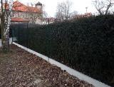 Realizace - Kralovice - pletivový plot