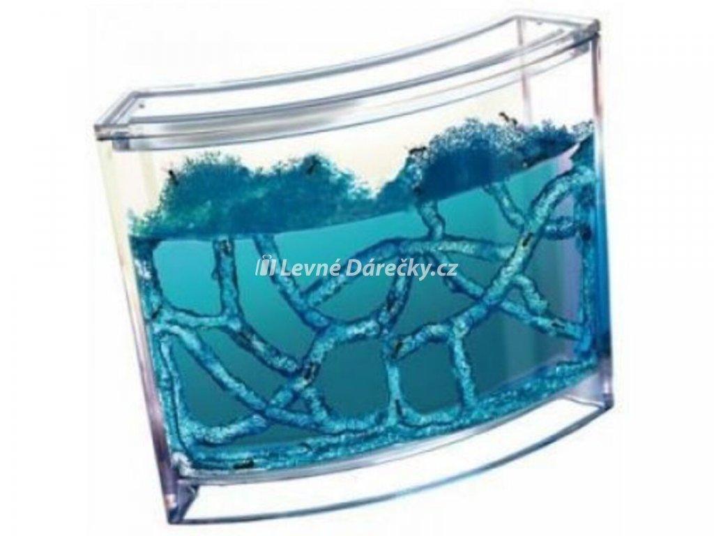 mravenci akvarium ant quarium domaci mraveniste blue 1
