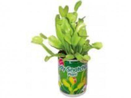 masozravka zrava rostlina 3