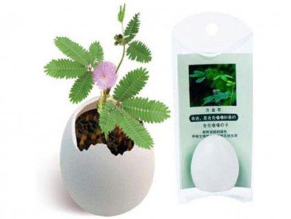 mimosa reaguje na dotyk 1