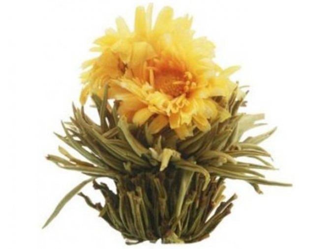 Kvetoucí čaj - Slunovrat