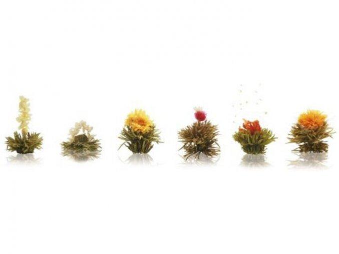 Kompletní dárková sada, bílý čaj