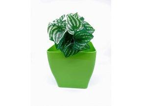 Plastový obal na květináč Vaso living - 17x17cm, zelený