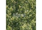 Umělý živý plot - bíle panašovaný jehličnan zerav 50x50 cm