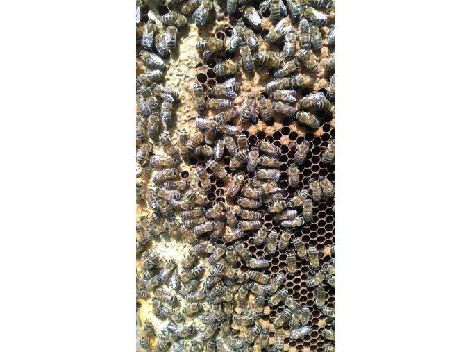Včelí matka 2021