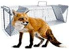 Pasce na líšky