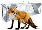 Sklopce na lišky