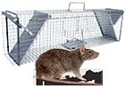 Sklopce na potkany