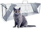 Sklopce na kočky