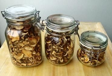 Jak správně sušit houby