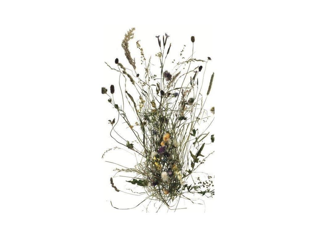 Ingeborg Stadelmann - Senné květy 100 g - pro ženskou bylinnou napářku
