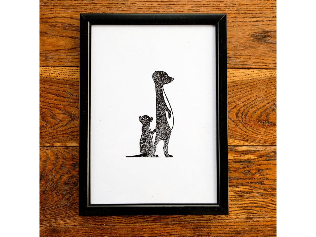 Načuhující surikata A4