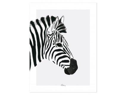 P0264 zebre