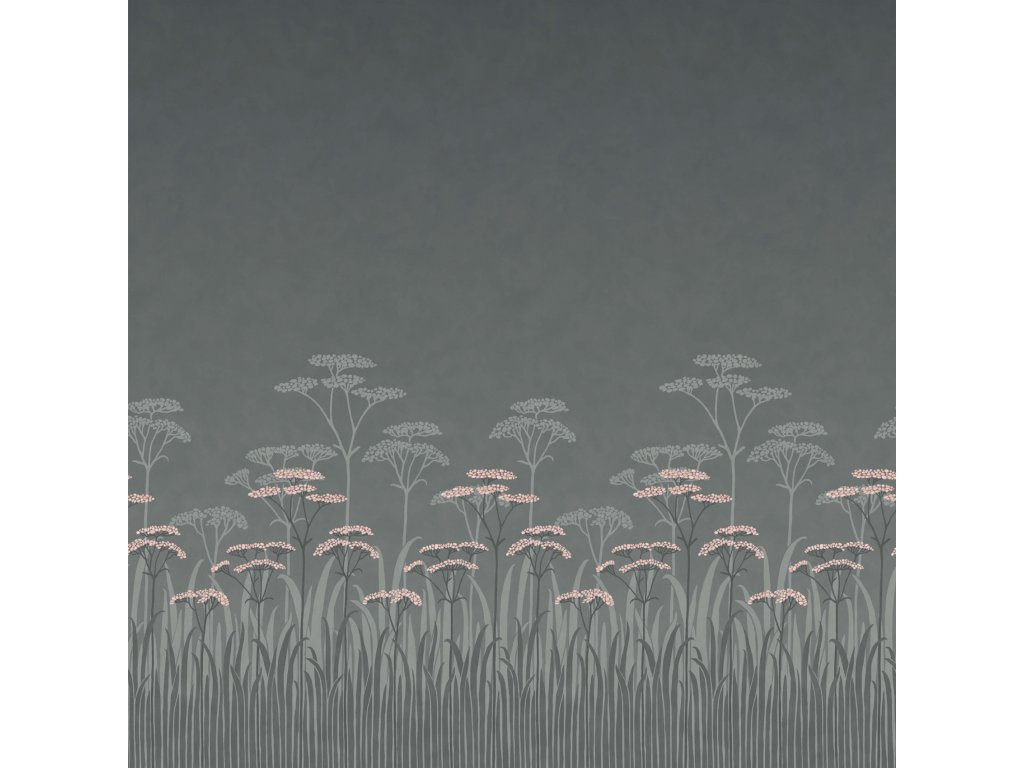 Achillea Twilight 1700x1700