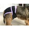 Nepropustné kalhotky pro psy BÍLÁ BARVA - inkontinenční/ hárací + savá vložka zdarma