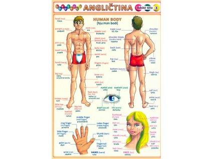 Obrázková angličtina 3 - Lidské tělo