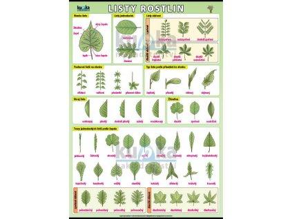 Listy rostlin
