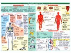 Biologie člověka 2tabulka
