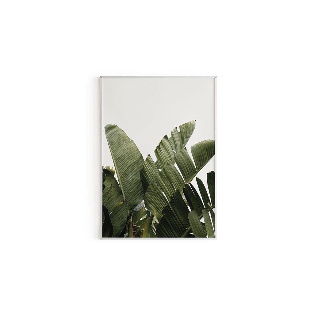 Plakát Plant